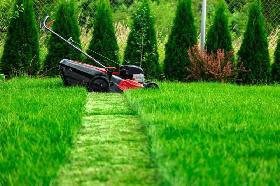 Lawnmower, trimming and cleaning services