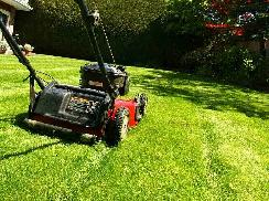 Grass cutting and Garden care