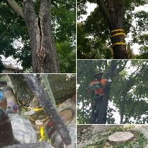 TREE SERVICES - TREE REMOVAL -PRUNING -FULLY INSURED AFFORDABLE