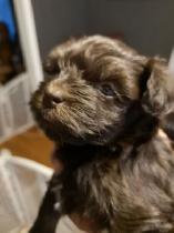 Dogs & Puppies for Rehoming in Fredericton   Post or Find Dogs